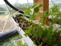 Aquaponic Towers Oregon