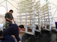 Aquaponics Dome Interior