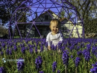 Puple Flowers-Purple Dome-Edit
