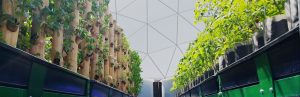 Vertical Growing Towers in a Commercial Aquaponic Dome Farm?