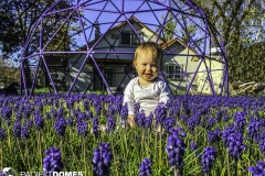 Puple-Flowers-Purple-Dome-Edit