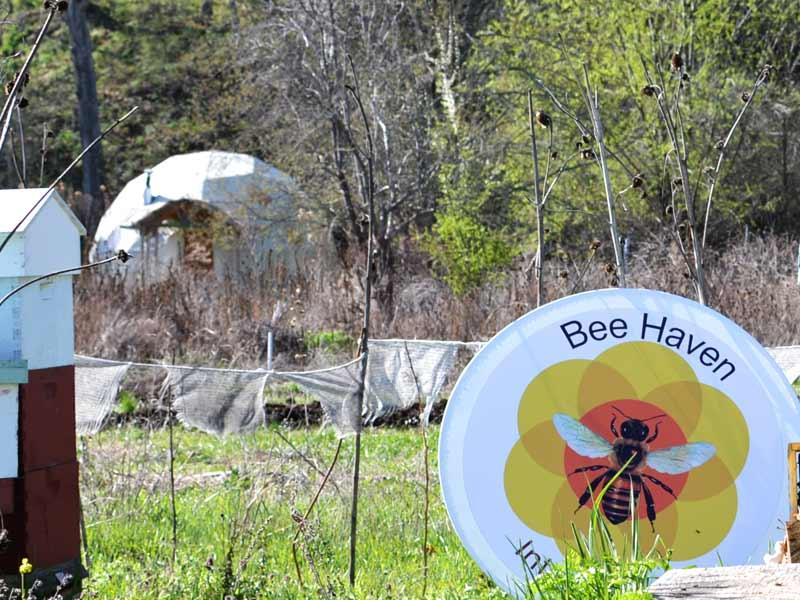 Bee-Haven-1