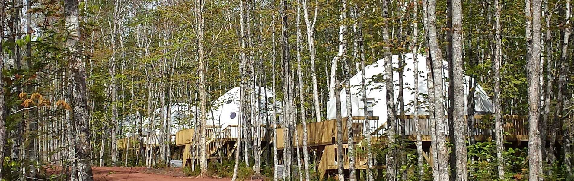 Treetop Have Domes