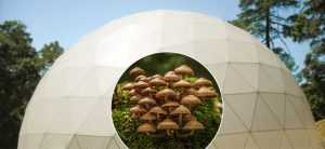 Greenhouse Domes - Mycoculture