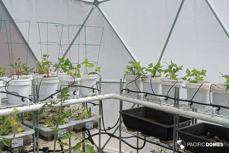 greenhouse dome, geodesic greenhouse, grow dome