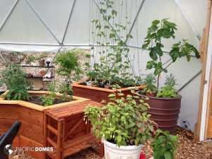 greenhouse interior 16'