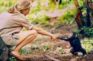 Jane Goodall touching a baby Chimpanzee's outstretched hand