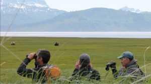Adventure Travel - Alaskan Bears viewed through binoculars