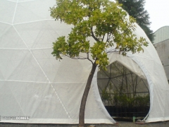 p-domes-greenhouse-dome-10