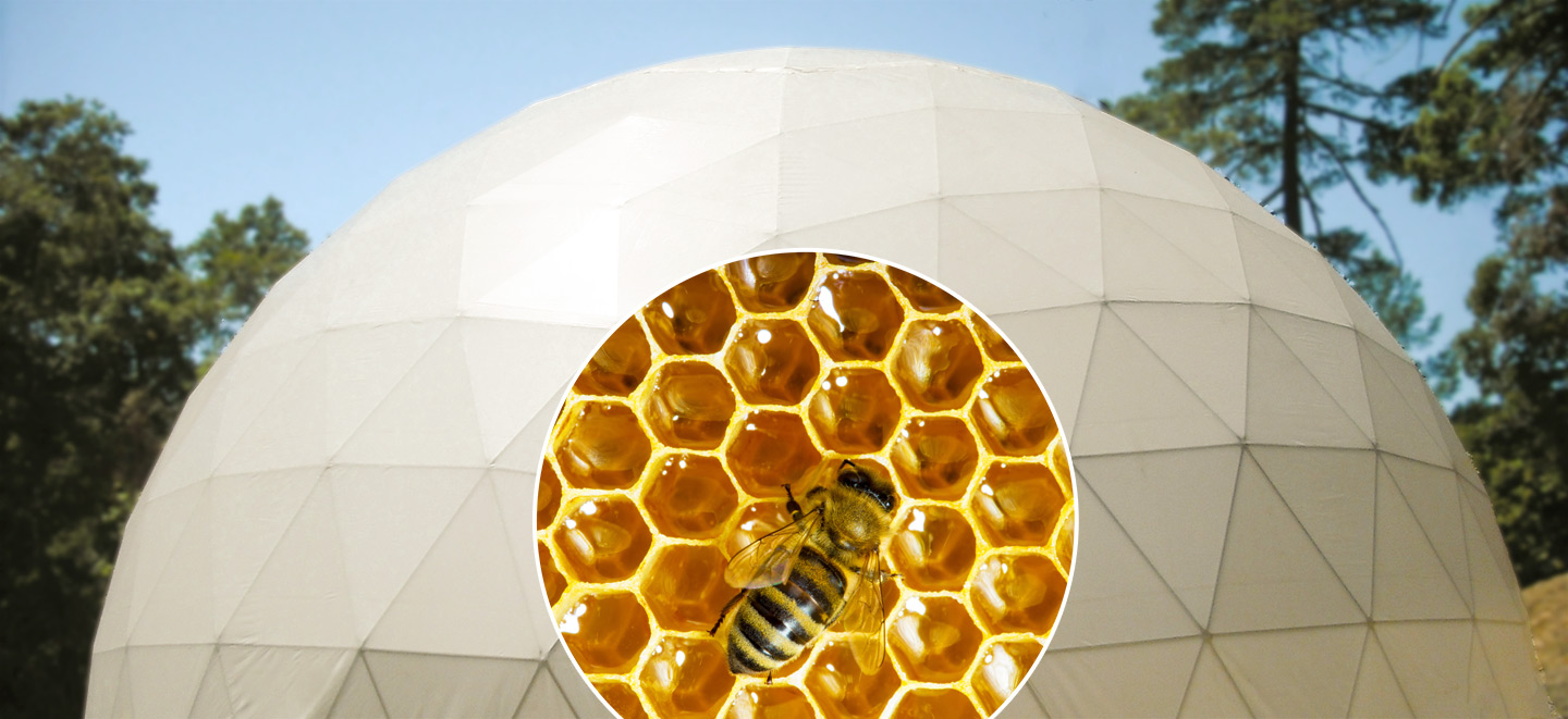 Bee Haven Dome