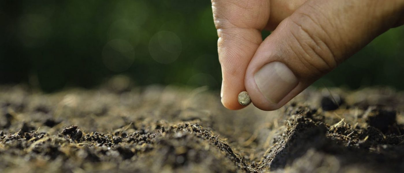 plant a seed day