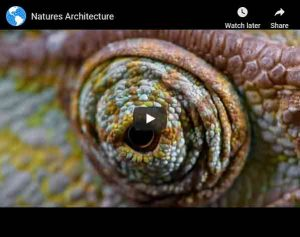 Natures Architecture Video