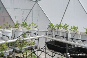 greenhouse dome, geodesic greenhouse, grow dome