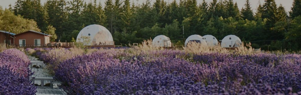 dome home, geo dome, glamping dome